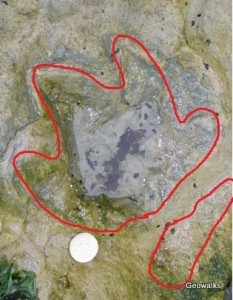 Chirotherium footprint, Kildonan Isle of Arran. Image courtesy Angus Miller